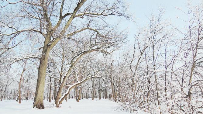 Prognoza pogody na dziś: słońce <br />powalczy ze śniegiem