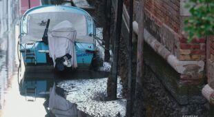 W Wenecji odnotowano niski poziom wody